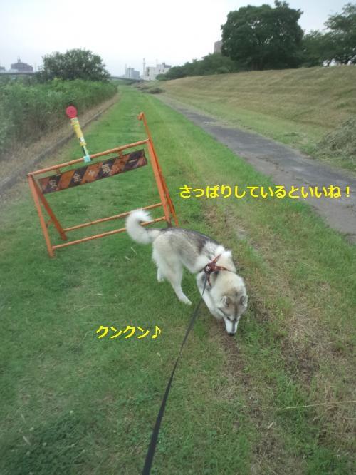 DCF203_convert_20120723224442.jpg