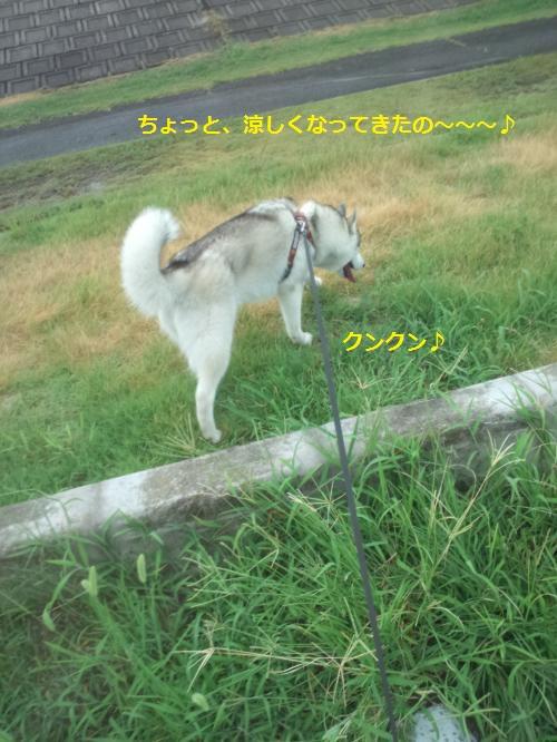 DCF230_convert_20120825104533.jpg