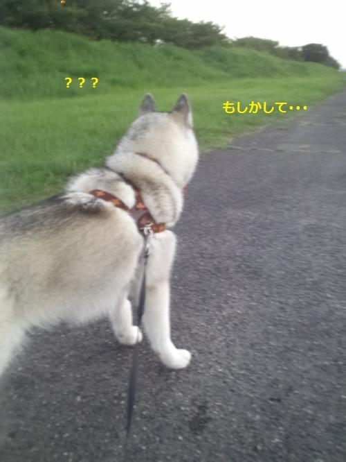 DCF249_convert_20120913194611.jpg