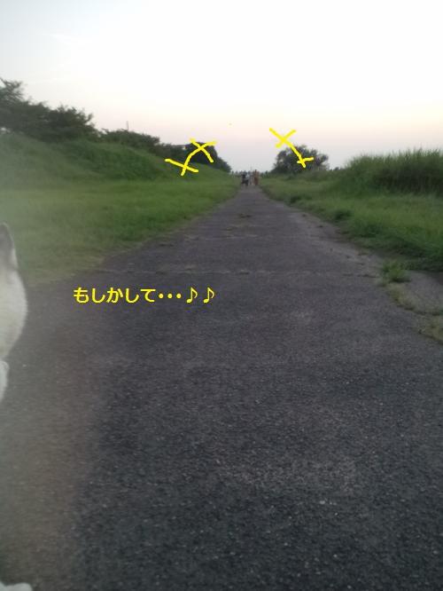 DCF250_convert_20120913193951.jpg