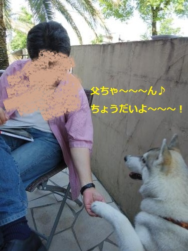 IMGP0235_convert_20120612111742.jpg