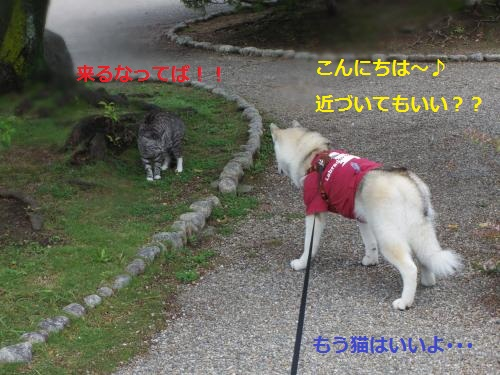 IMGP0293_convert_20120621111614.jpg