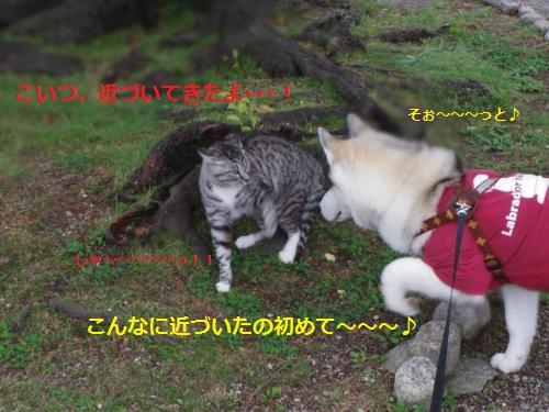 IMGP0294_convert_20120621112212.jpg