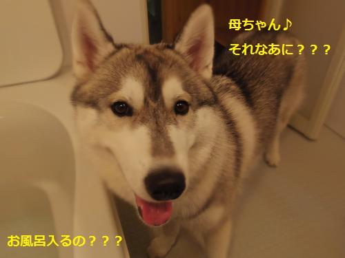 IMGP0301_convert_20120624222854.jpg
