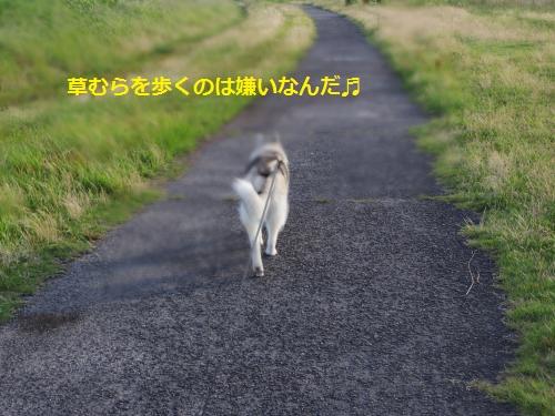 IMGP0317_convert_20120623113157.jpg