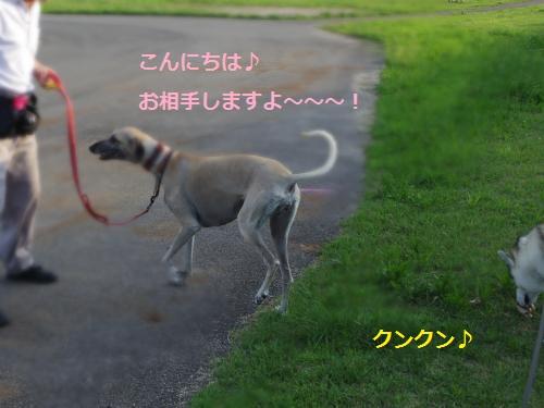 IMGP0318_convert_20120623114448.jpg