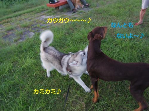 IMGP0363_convert_20120911153953.jpg