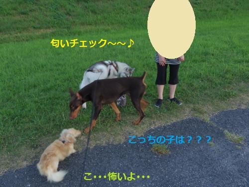 IMGP0366_convert_20120911154842.jpg