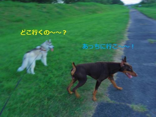 IMGP0367_convert_20120911155009.jpg
