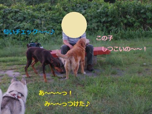 IMGP0374_convert_20120911155507.jpg