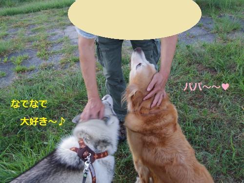 IMGP0377_convert_20120911155207.jpg
