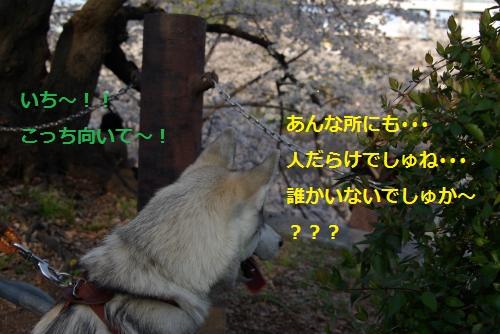 IMGP3050_convert_20120409193750.jpg