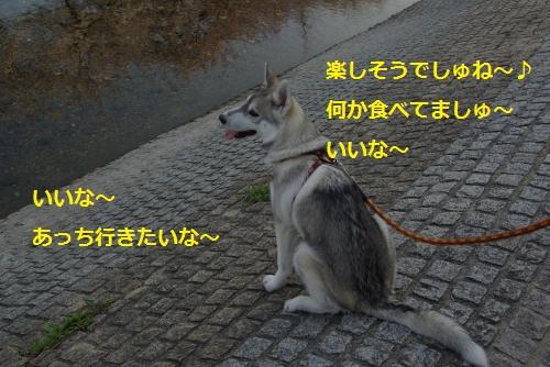 IMGP3053_convert_20120409195012.jpg