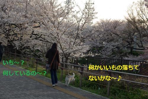 IMGP3055_convert_20120409195412.jpg