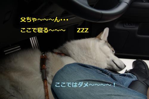 IMGP3242_convert_20120610143005.jpg
