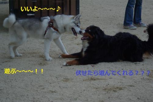 IMGP3280_convert_20120611143404.jpg