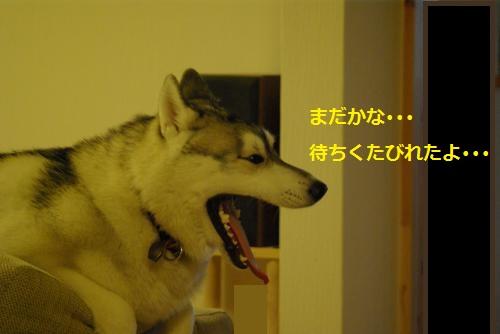 IMGP3308_convert_20120925201440.jpg