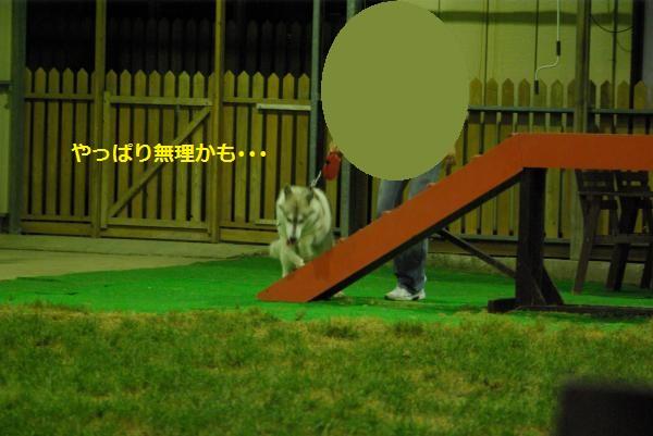 IMGP3338_convert_20121027123120.jpg