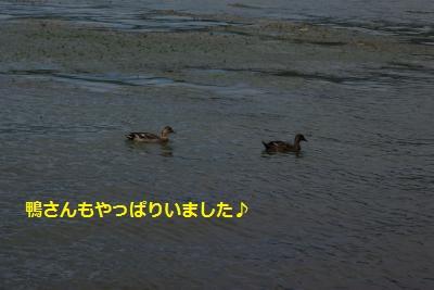 IMGP6927_convert_20140930153146.jpg