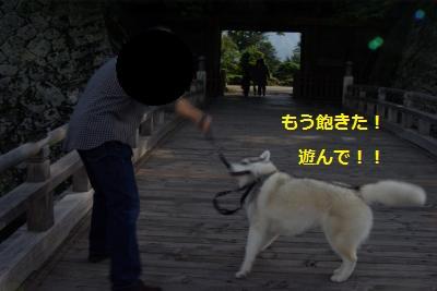 IMGP6976_convert_20141003133246.jpg