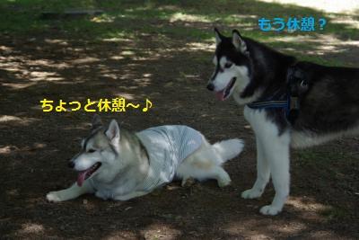 IMGP7011_convert_20140930155221.jpg