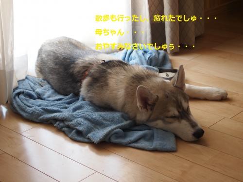 P4062126_convert_20120407001820.jpg