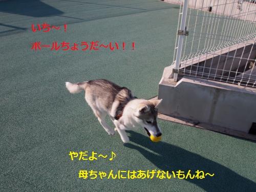 P4072140_convert_20120411172522.jpg