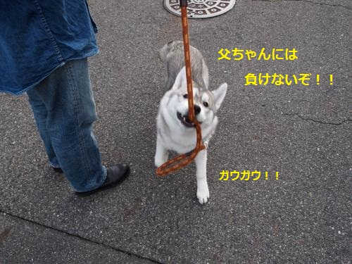 P4132181_convert_20120521001359.jpg