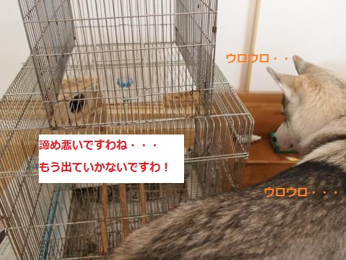 P4182279_convert_20120515145633.jpg
