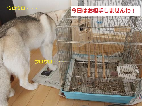 P4182280_convert_20120515145405.jpg