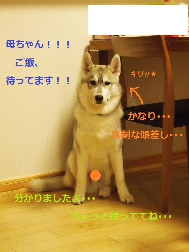 P4202294_convert_20120423203049.jpg