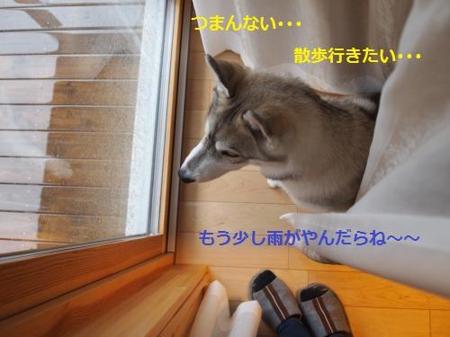 P4232302_convert_20120423201427.jpg