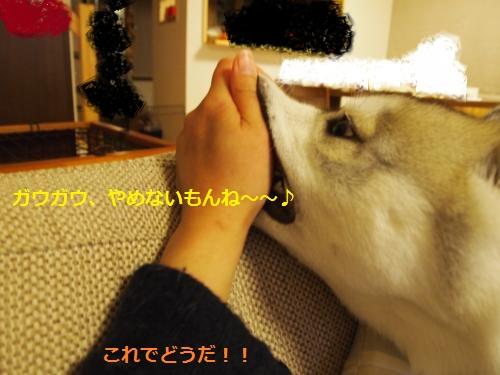 P4232329_convert_20120522211558.jpg