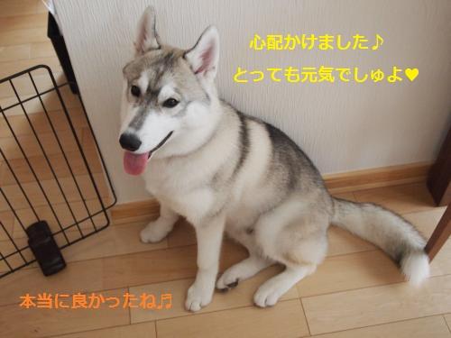 P4242414_convert_20120427150222.jpg