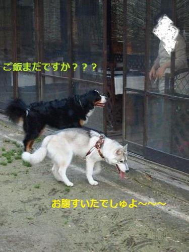 P4282495_convert_20120430233347.jpg
