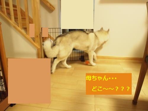 P4302584_convert_20120831145006.jpg