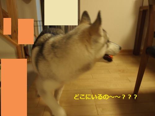 P4302586_convert_20120831150329.jpg