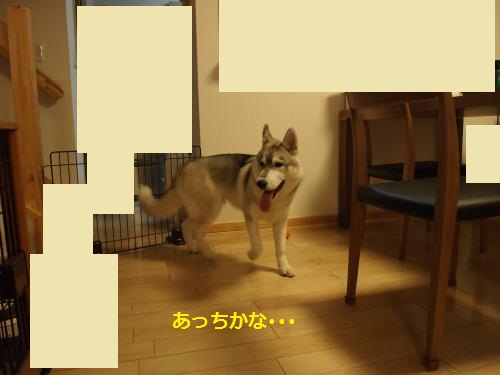 P4302587_convert_20120831150644.jpg