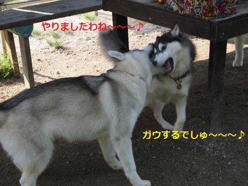 P5060108_convert_20120508202026.jpg