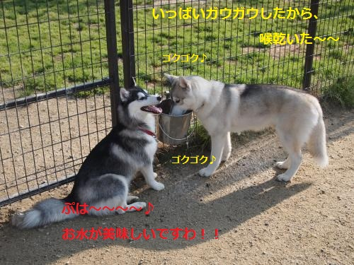 P5060118_convert_20120508202141.jpg