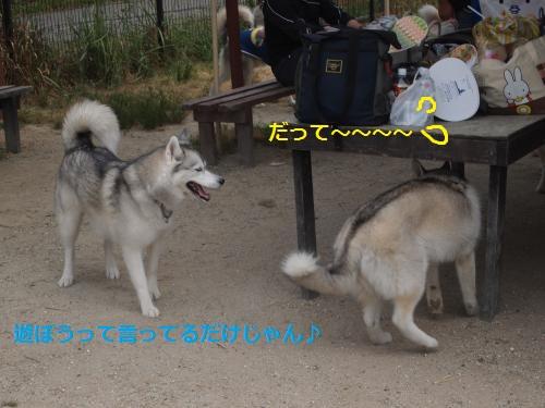 P6030286_convert_20120604112121.jpg