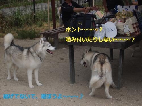 P6030287_convert_20120604112417.jpg