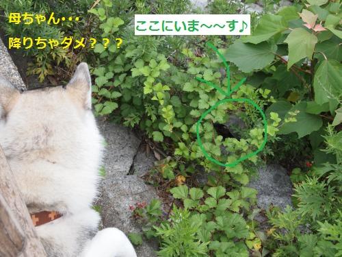 P6240560_convert_20120629125803.jpg