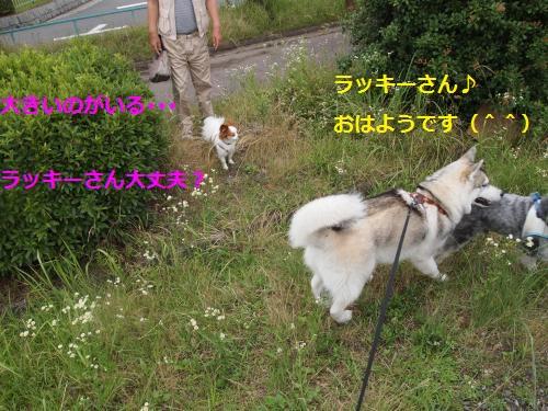 P6260590_convert_20120628120632.jpg