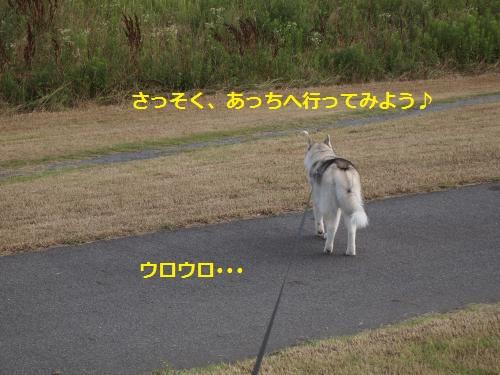 P6280647_convert_20120704132047.jpg