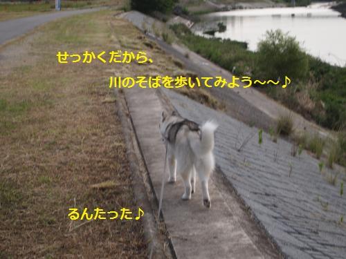 P6280649_convert_20120704133134.jpg