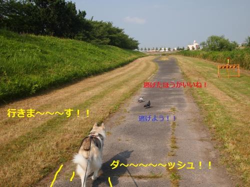 P6290677_convert_20120705120317.jpg