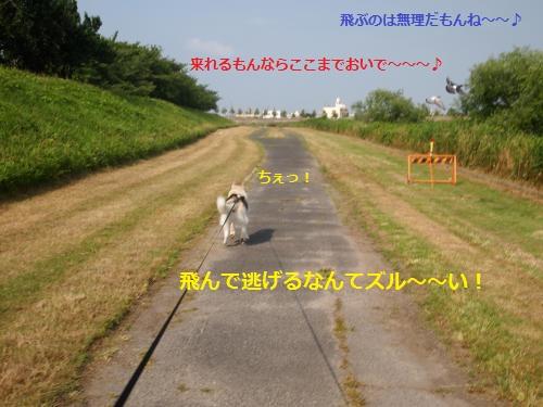P6290681_convert_20120705121351.jpg