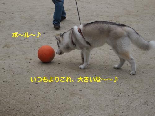 P7010764_convert_20120706104111.jpg