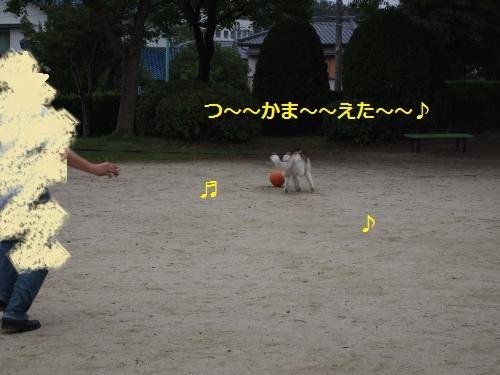 P7010767_convert_20120706105019.jpg
